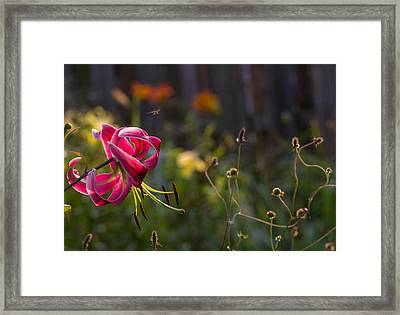 A Day In The Life Framed Print by Mary Amerman