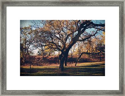 A Day That Glows Framed Print by Laurie Search