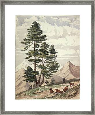 A Deodar Tree Framed Print by British Library