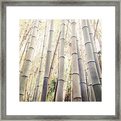 A Different Kind Of Forest Framed Print by Aron Kearney
