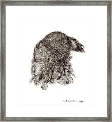A Dog Named Zorra Framed Print by Jack Pumphrey