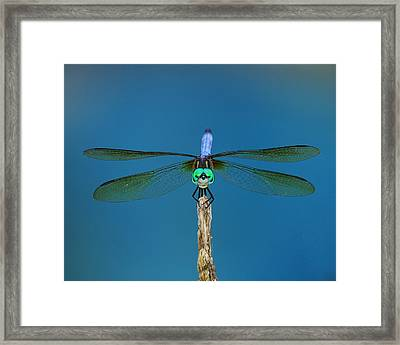 A Dragonfly IIi Framed Print by Raymond Salani III