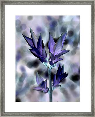 A Dream Of Spring Framed Print by Bishopston Fine Art