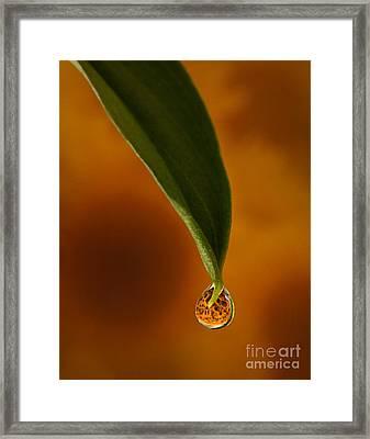 A Drop Of Sunshine Framed Print by Susan Candelario