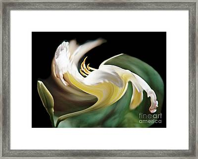 A Drunk Daylily Bloom Framed Print by ImagesAsArt Photos And Graphics
