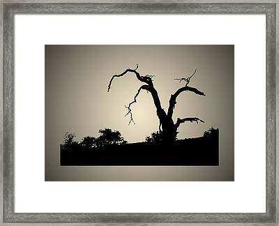 A Dying Giant Framed Print by Robert Woodward