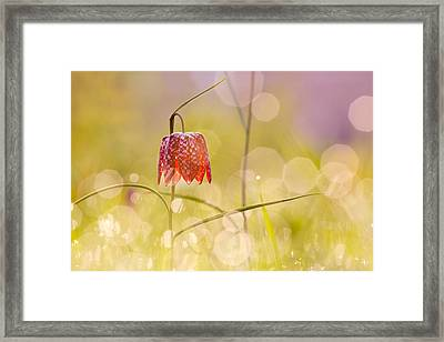 A Fairies' Place II _snake's Head Fritillary Framed Print by Roeselien Raimond
