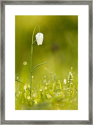 A Fairies' Place IIi _snake's Head Fritillary Framed Print by Roeselien Raimond