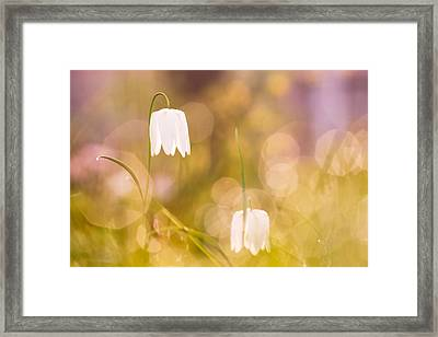 A Fairies' Place Framed Print by Roeselien Raimond