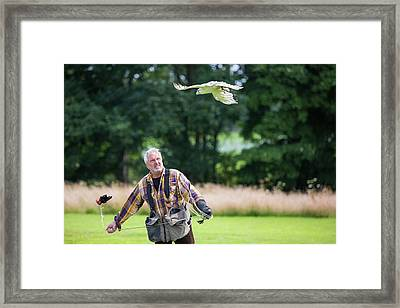A Falconry Display Framed Print by Ashley Cooper