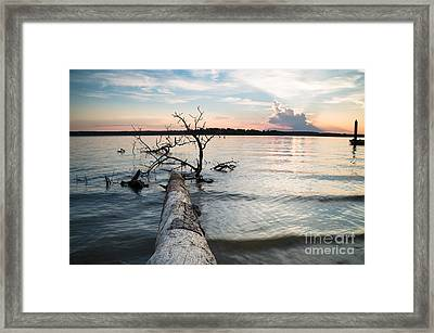 A Fallen Tree And The Evening Sky Framed Print by Ellie Teramoto