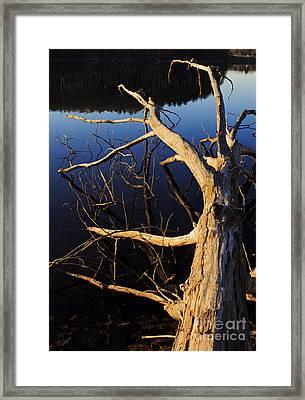 A Fallen Tree Beside A Lake At Sunset Framed Print by Edward Fielding