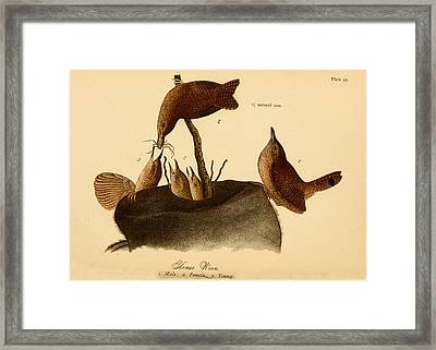 A Family Of House Wrens Framed Print by Philip Ralley