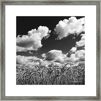 A Field Of Wheat . Limagne. Auvergne. France Framed Print by Bernard Jaubert