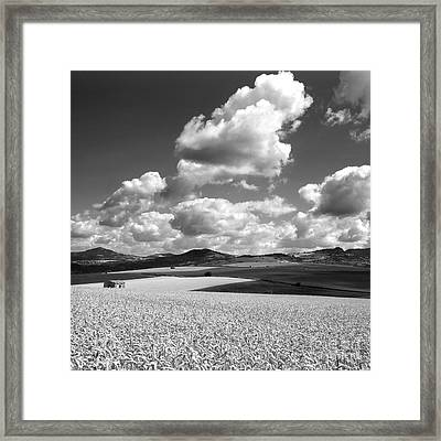 A Field Of Wheat. Limagne. Auvergne. France Framed Print by Bernard Jaubert