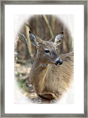 A Forest Beauty  Framed Print by Lorna Rogers Photography