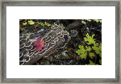 A Forest Tide Pool Framed Print by Sean Foster