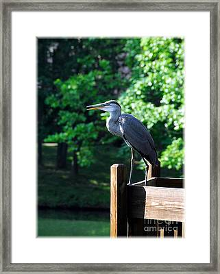 A Frequent Visitor 2 Framed Print by Mel Steinhauer