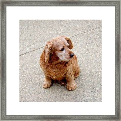 A Friend Named Bud Framed Print by Mary Deal
