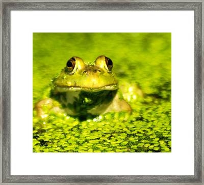 A Frogs Day Framed Print by Optical Playground By MP Ray