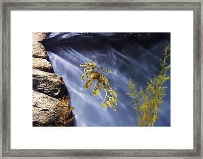 A Funny Seahorse--leafy Seadragon Framed Print by Angela A Stanton