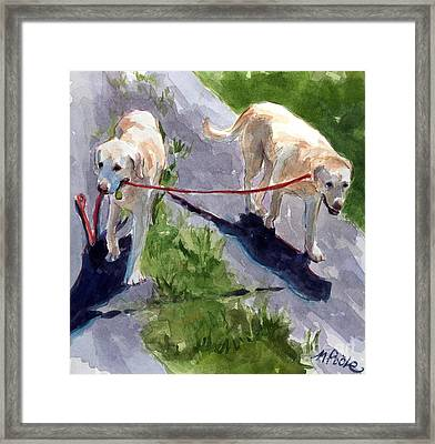 A Gentle Lead Framed Print by Molly Poole