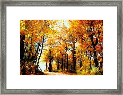 A Golden Day Framed Print by Lois Bryan