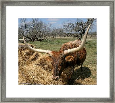 A Great Pair Framed Print by Kathy Peltomaa Lewis