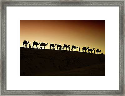 A Group Of Camel Herders Framed Print by Piper Mackay