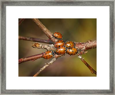 A Group Of Ladies Framed Print by Jean Noren
