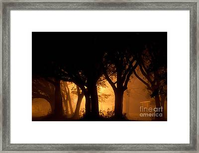A Grove Of Trees Surrounded By Fog And Golden Light Framed Print by Jo Ann Tomaselli