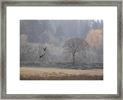 A Hawk's Paradise Framed Print by Angie Vogel