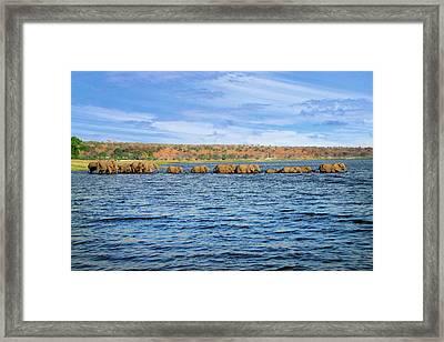 A Herd Of African Bush Elephants Framed Print by Miva Stock