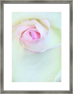 A Hint Of Pink Framed Print by Sabrina L Ryan