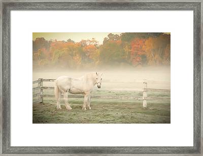 A Horse With No Name Framed Print by K Hines