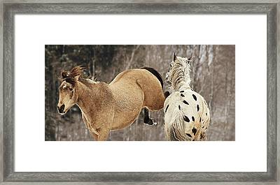 A Kick In The Chops Framed Print by Carey Dils