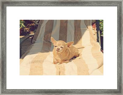 A Life Of Leisure Framed Print by Laurie Search