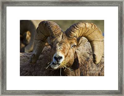 A Light Lunch Framed Print by Mike  Dawson