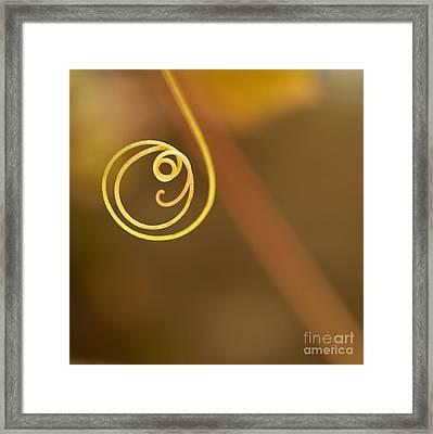 A Little Curl Framed Print by Sabrina L Ryan