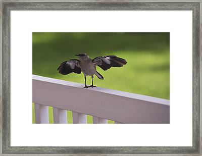 A Little Visitor Northern Mockingbird Framed Print by Terry DeLuco