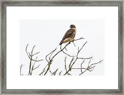 A Lofty Perch Framed Print by Belinda Greb