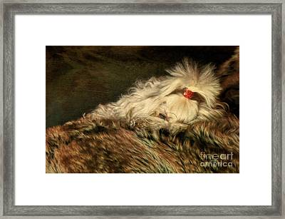 A Long Winter's Nap Framed Print by Lois Bryan