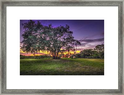 A Look Back Framed Print by Marvin Spates