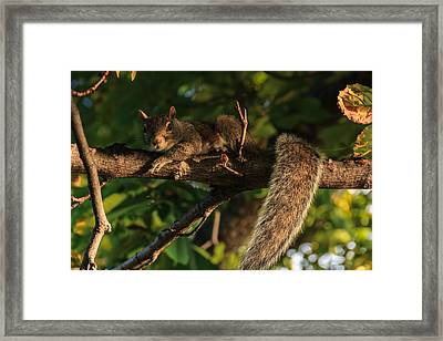 A Look Of Indignation Framed Print by Chris Fletcher