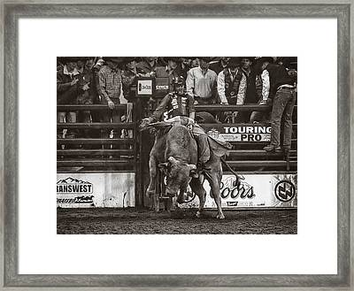 A Lot Of Bull At The National Stock Show- Sepia Framed Print by Priscilla Burgers