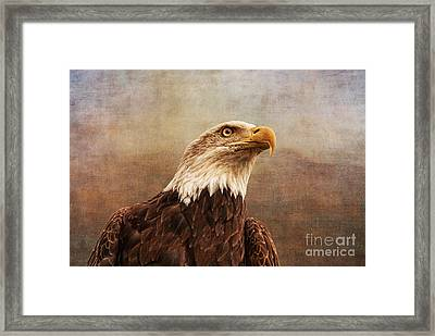 A Majestic Creature Framed Print by Cindy Tiefenbrunn