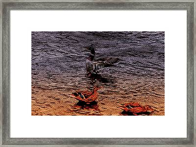 A Man And His Ladies Framed Print by Chris Mcmannes