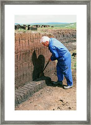 A Man Harvesting Peat Framed Print by Ashley Cooper
