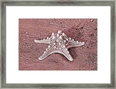 A Matter Of Echinodermata Framed Print by Betsy C Knapp