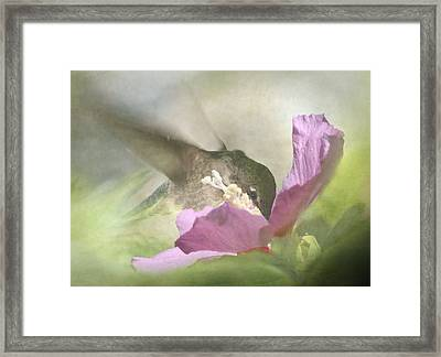 A Moment In The Flower Framed Print by Angie Vogel